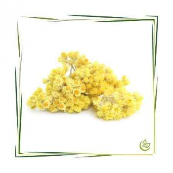 Hydrolat Immortelle Natural BIO 3 l