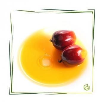 Palmöl desodoriert manske