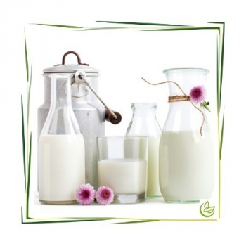 Parfümöl Milk 100 ml